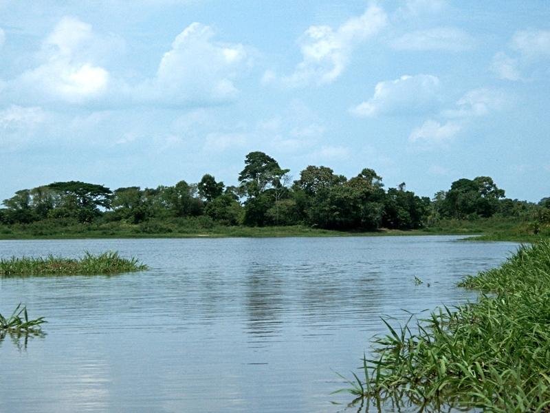 Waldinsel